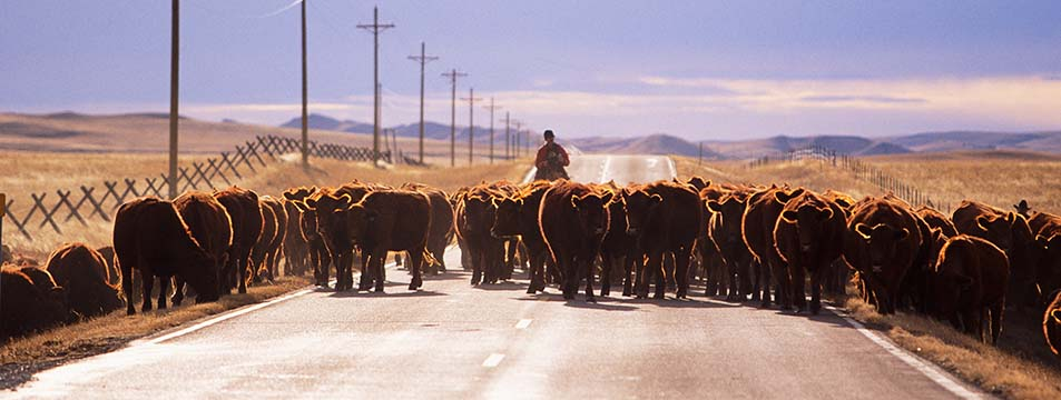 Montana Traffic Jam | Jason Savage Photography