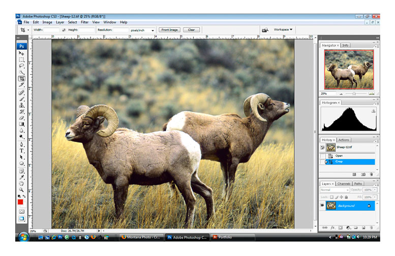 Big Horn Sheep Screenshot