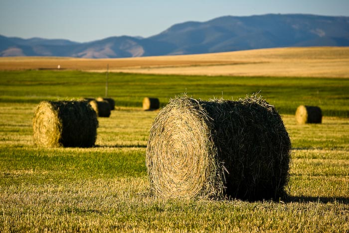 Hay Bale in Helena Valley